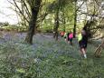 Bluebell Run